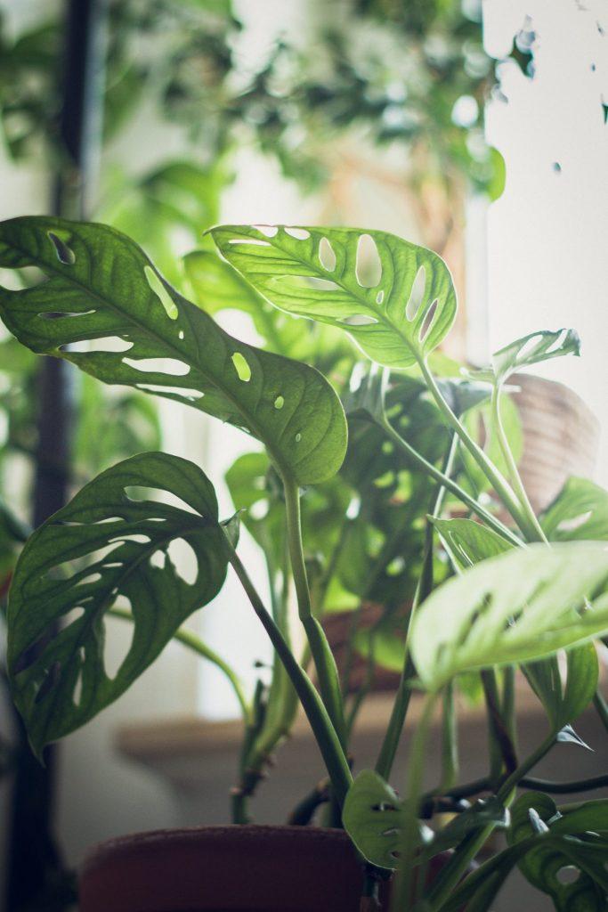風通しの良い植物の写真