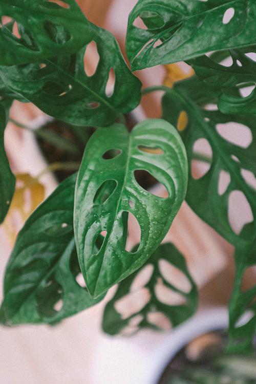 葉っぱの写真