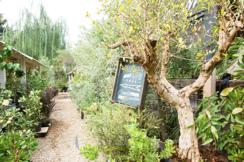 齊藤さん率いるSOLSOの活動拠点となるのが、ここSOLSO FARM。丘陵地に広がる空間は、まるで植物園のよう